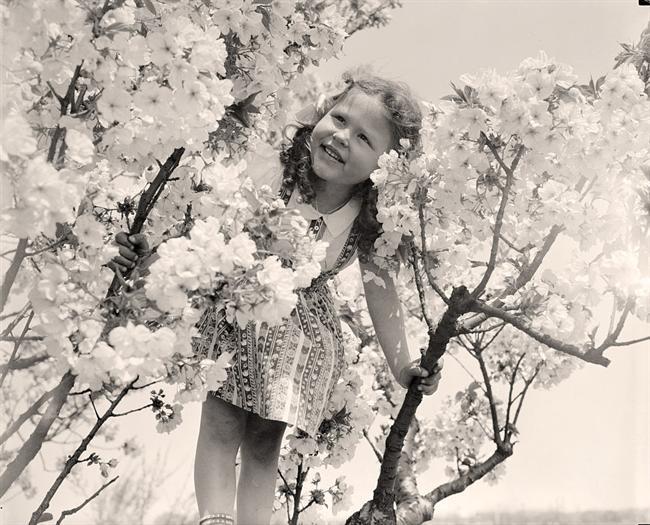 cherry-girl-tree-in